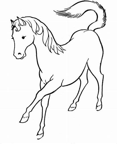 Horse Coloring Printable Pages Template Templates Colouring