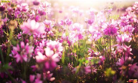 ภาพพื้นหลังดอกไม้สีชมพูธรรมชาติ ภาพดอกไม้ พื้นหลังดอกไม้