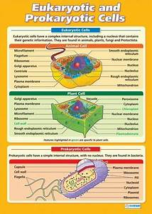 Eukaryotic And Prokaryotic Cells Poster