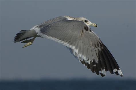 Sw Boats Louisiana by Sw Louisiana Birds Offshore Cameron 1 19 2012