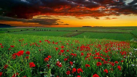 Image For Full Hd Nature Wallpapers 1080p Desktop