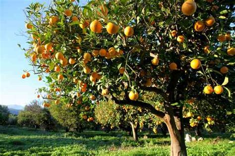 Best Backyard Fruit Trees - how to start a mini backyard orchard in the garden