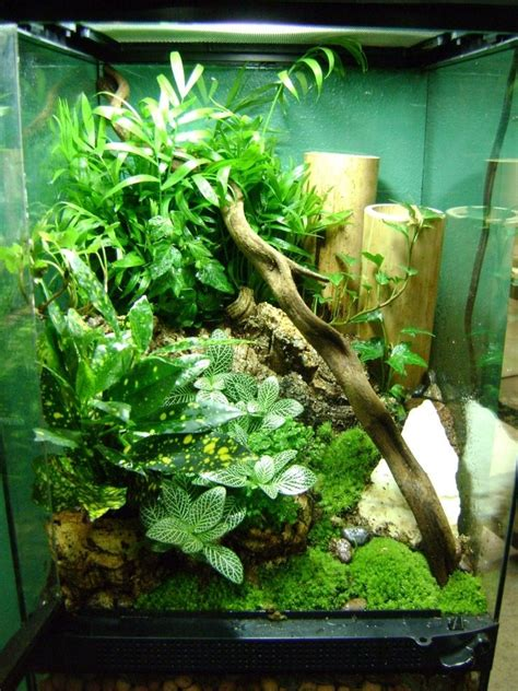 planted vivarium vivarium terrarium planted tanks vivarium to look and i want