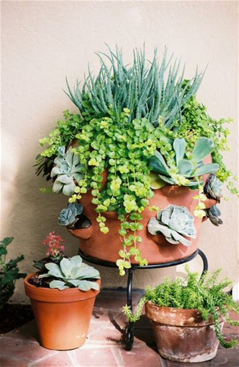 succulents in a strawberry pot with creeping container gardening