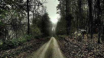 Spooky Forest Path Landscape Trees Nature Wallpapers