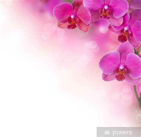 orchid flower border design wall mural pixers
