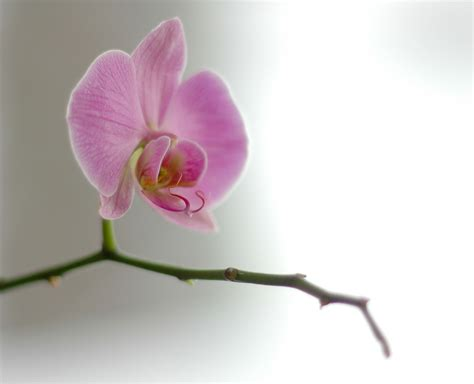 how to grow orchids how to grow orchids mama knows