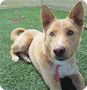 Foxy | Adopted Dog | 5083 | Lloydminster, AB | Australian ...
