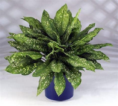NASA compila lista com as melhores plantas pra limpar o ar ...