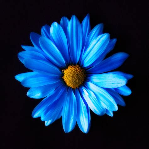 blue photograph by shannon gan dathu