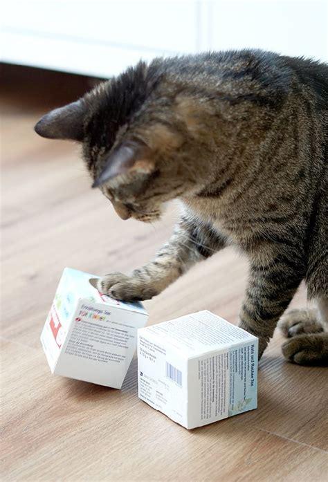 ideen und tipps fuer tolle katzenspiele katzen spiele
