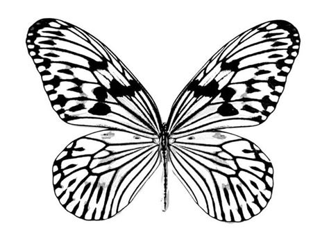 realistic butterfly drawing coloring page realistic
