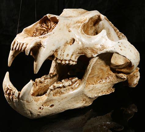 simulation animal polar bear skull resin crafts specimen