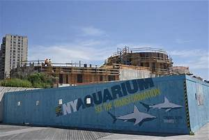'Ocean Wonders: Sharks!' rises above the Coney Island ...
