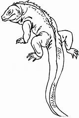 Lizard Coloring Pages Printable Animal sketch template