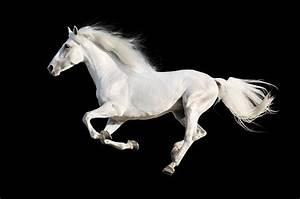 Free white horse Images, Pictures, and Royalty-Free Stock ...