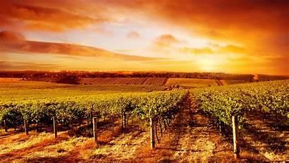 Wallpapers Sunset Australia Vineyard South Amazing 4k