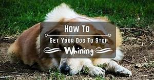 how to your dog to stop whining