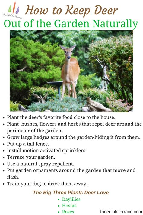 how to keep deer out of your garden how to keep deer out of the garden naturally and easily