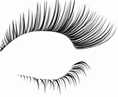 Eyelash Eyelashes Lashes Photoshop Template Clipart Eye