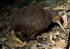 North Island Brown Kiwi Genome