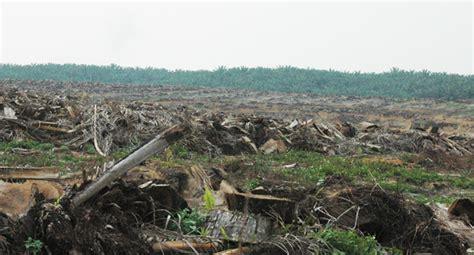 biaya pembersihan lahan kelapa sawit berita sawit diduga kawasan hutan di desa sei sarik