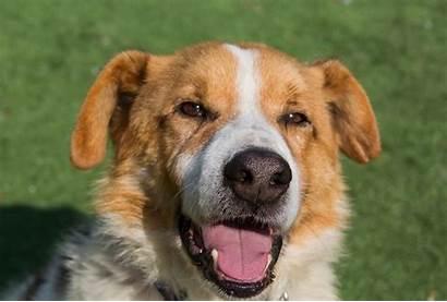 Dylan Dog Breed Cross Male Adoption