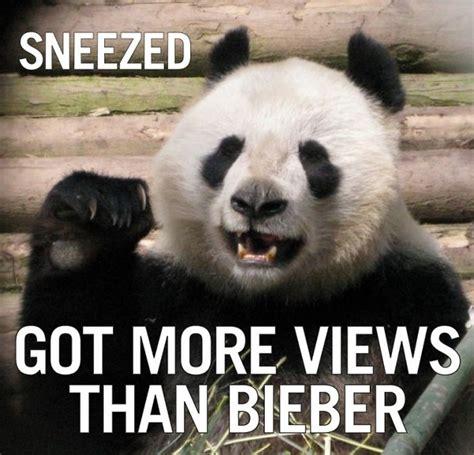 Sneezing Panda Meme - funny panda is funny rumble