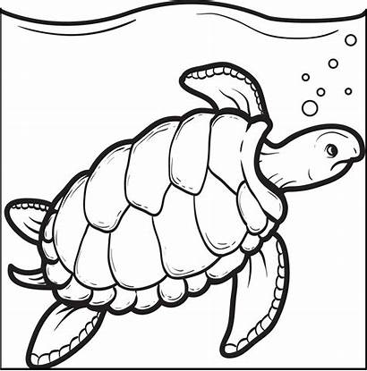Turtle Coloring Swimming Pages Sheets Printable Sea
