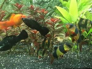 Welche Fische Passen Zusammen Aquarium : welche fische passen zusammen das perfekte aquarium ~ Lizthompson.info Haus und Dekorationen
