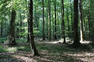 Foret à Bois : le fili re for t et bois une fili re d 39 avenir pour l 39 emploi ~ Nature-et-papiers.com Idées de Décoration