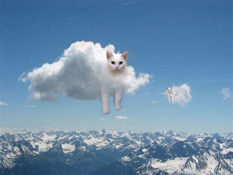 Cloudy Sky Purrshare