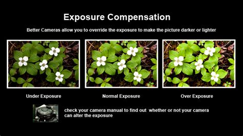 exposure compensation driverlayer search engine