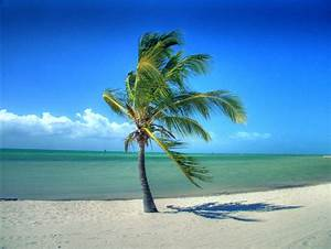 Blowing Palm Tree   Key West, FL If you like my work, you ...