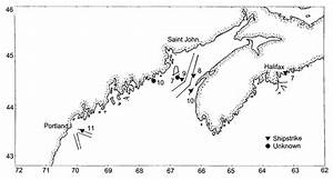 Right Whale Fatalities And Shipping Lanes In The Gulf Of Maine And