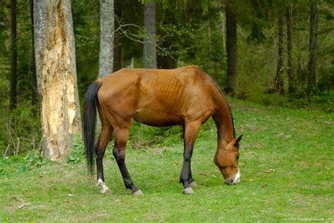 horse grazing horses centauress should deviantart colics pasture freebigpictures stallion doctorramey them