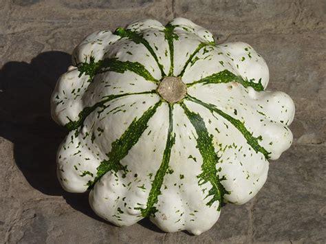 cuisiner le patisson blanc marmiton a la découverte de nouveaux aliments manger vite et