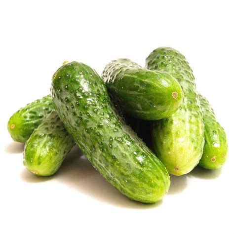 Cucumber Seeds by 100pcs Seeds Cucumber Organic Self Pollinating Pickling