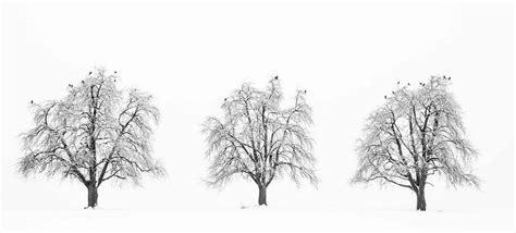 fotografieren im schnee stellt hohe anforderung  die