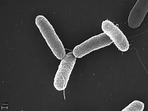 Structural Bioc... Salmonella