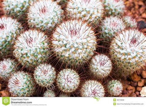 cactus flower in botanic garden stock photo image 48743858