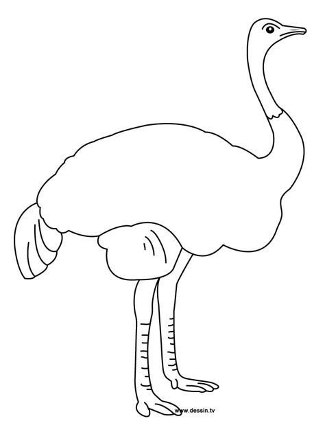 Coloring Templates Printable by Free Printable Ostrich Coloring Pages For