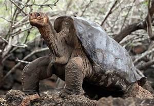 Top Animals: Rare Animals Caught On Tape-Top Things Around Us
