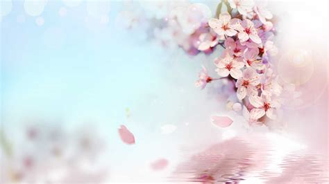Flower Animation Wallpaper - flower desktop animated wallpaper 1921x1080 cool