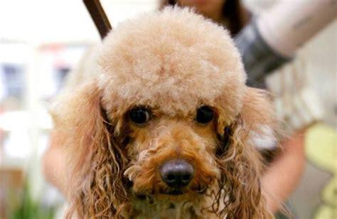 japanese dog washing machine  pet cleaning  pets