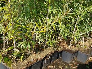 Sanddorn Pflanzen Kaufen : pflanzen mit anwachsgarantie hippophae rhamnoides sanddorn hier g nstig kaufen ~ Eleganceandgraceweddings.com Haus und Dekorationen