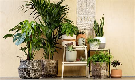Guide To The Best Indoor Plants