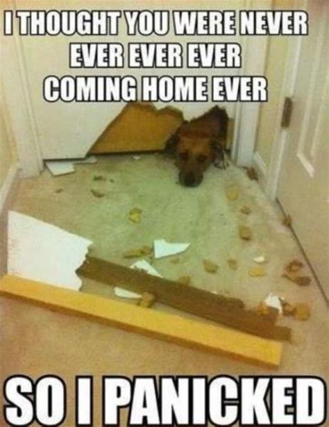 Jehovah Witness Halloween Meme by Funny Dog Memes Cuteness Overflow