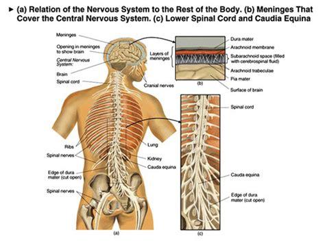 Pijn in nieren en rugpijn