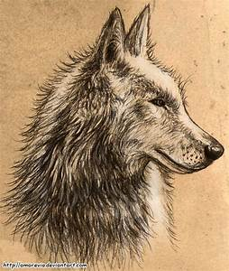 Wolf Profile Drawing | www.pixshark.com - Images Galleries ...